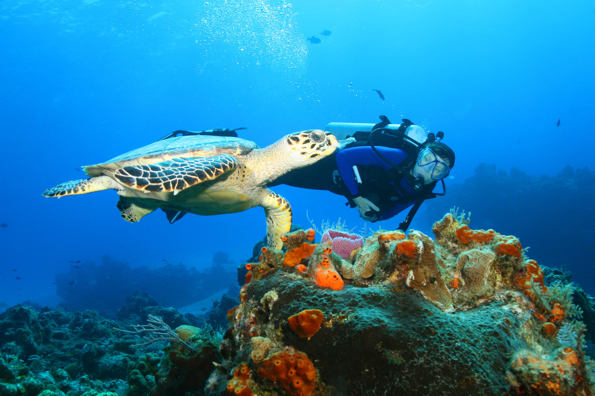 Scuba Diver and Sea Turtle Cozumel